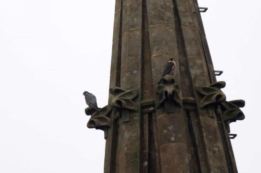 Belatz handi bikote batek habia egin du Artzain Oneko katedralean. (Argazkia: Eguzki)