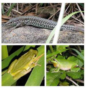 haritzalde biodibertsitatea